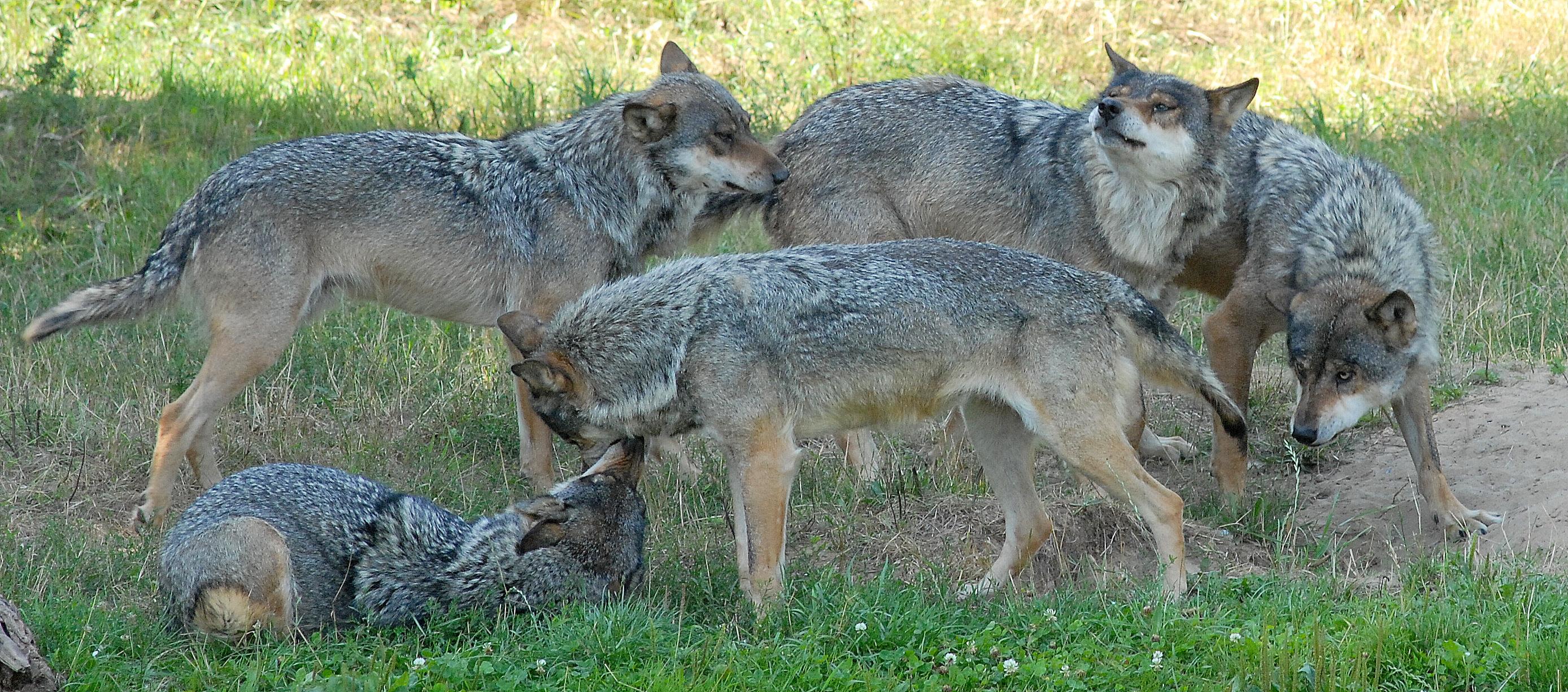 Skandinavisk Dyrepark rabat verdens næststørste land